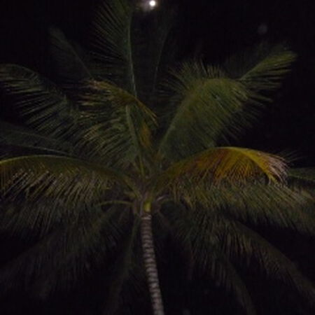 12/12/08 Caribbean Holidaze, Runaway Bay, JAM